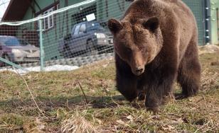 O persoană a fost atacată de un urs în Tulgheș, Harghita